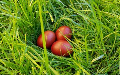 Ostereier mit Naturfarben …
