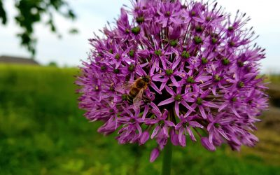 … vom Honig, den Bienen & einem wunderschönen Hobby