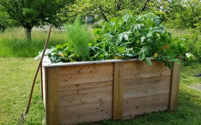 Gemüse aus dem Praxisgarten